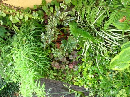 雨上がりの庭は緑が鮮やかですね_a0243064_07314871.jpg