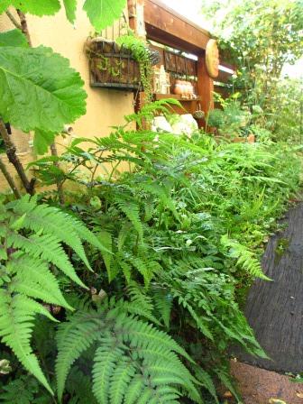 雨上がりの庭は緑が鮮やかですね_a0243064_07315970.jpg