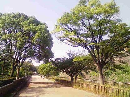 大阪城公園_f0202682_10503831.jpg