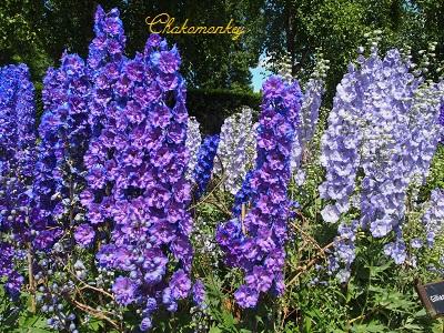 お弁当を持ってQueen Mary\'s Rose Gardenへ_f0238789_20103074.jpg