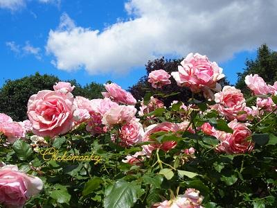 お弁当を持ってQueen Mary\'s Rose Gardenへ_f0238789_203374.jpg
