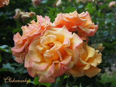 お弁当を持ってQueen Mary\'s Rose Gardenへ_f0238789_206197.jpg