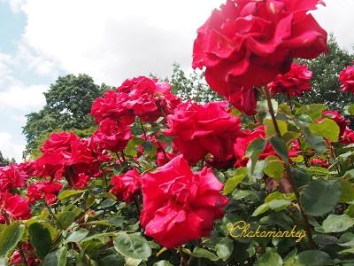 お弁当を持ってQueen Mary\'s Rose Gardenへ_f0238789_207430.jpg