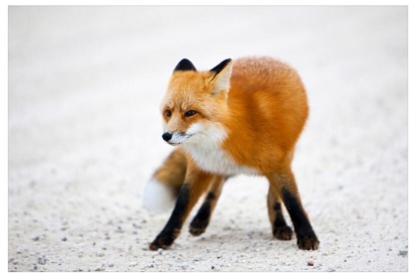 お狐さん、健気にがんばるっ!_f0168392_21495516.jpg