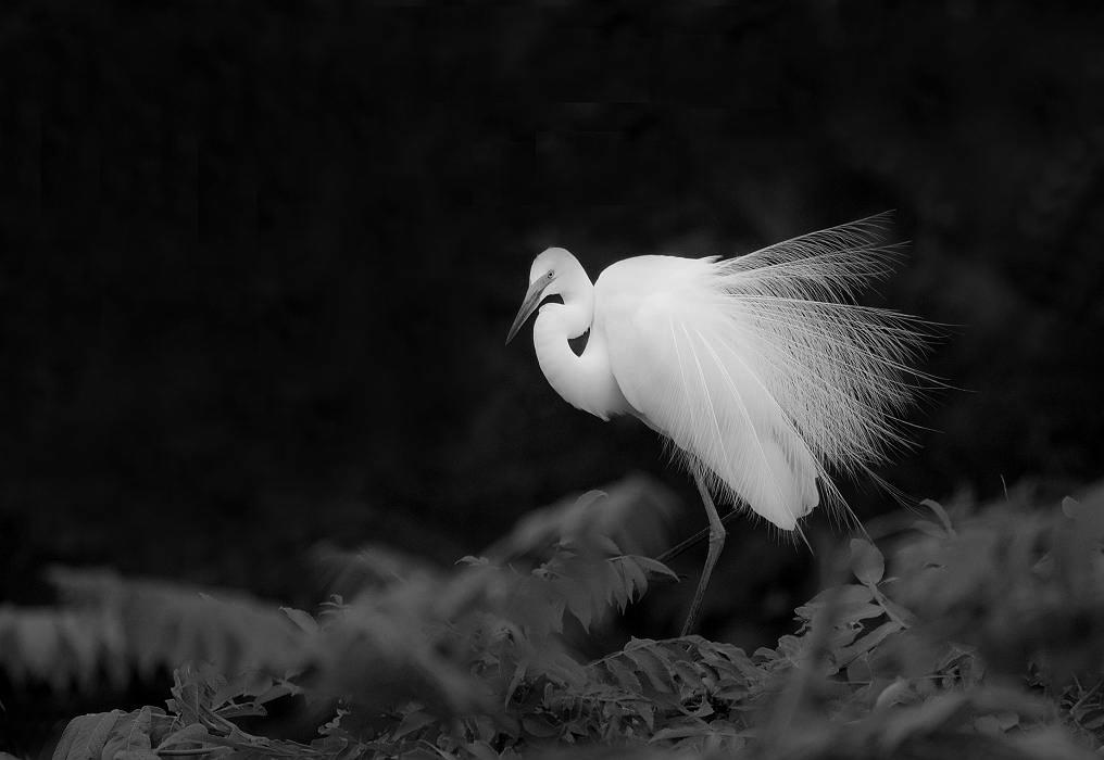白鷺、その4_c0077395_1859924.jpg
