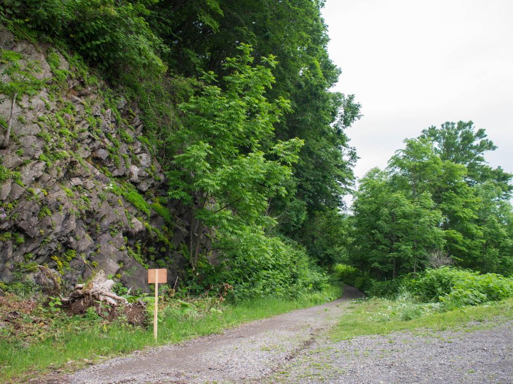 林道沿いの崖の上にピンクの花畑~「タカネナデシコ」の群落~_f0276498_22105651.jpg