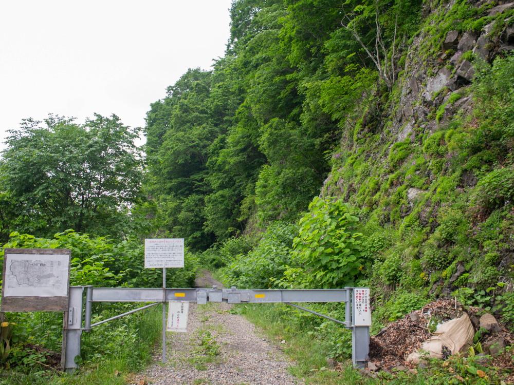 林道沿いの崖の上にピンクの花畑~「タカネナデシコ」の群落~_f0276498_22111708.jpg