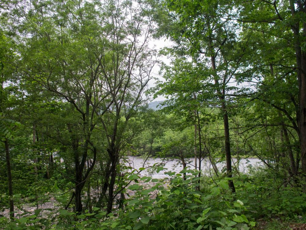 林道沿いの崖の上にピンクの花畑~「タカネナデシコ」の群落~_f0276498_22113485.jpg