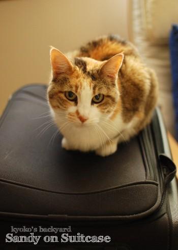 スーツケースと猫 2_b0253205_233259.jpg