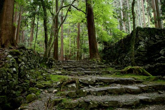 栂ノ尾高山寺 緑したたる_e0048413_20264018.jpg