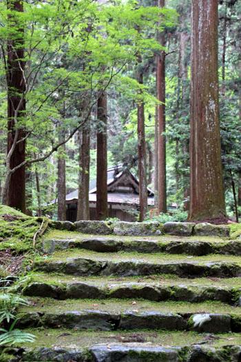 栂ノ尾高山寺 緑したたる_e0048413_20272338.jpg