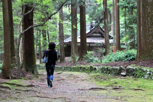 栂ノ尾高山寺 緑したたる_e0048413_2028111.jpg