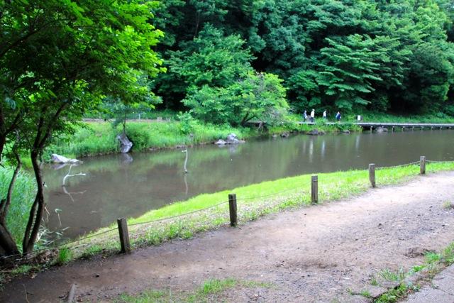 【四季の森公園】part 1_f0348831_21161619.jpg