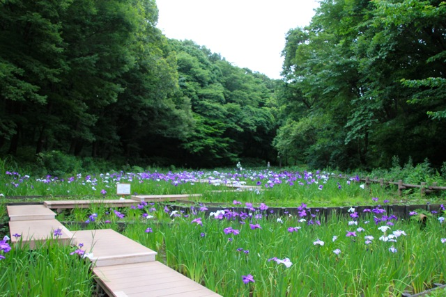 【四季の森公園】part 1_f0348831_21291404.jpg
