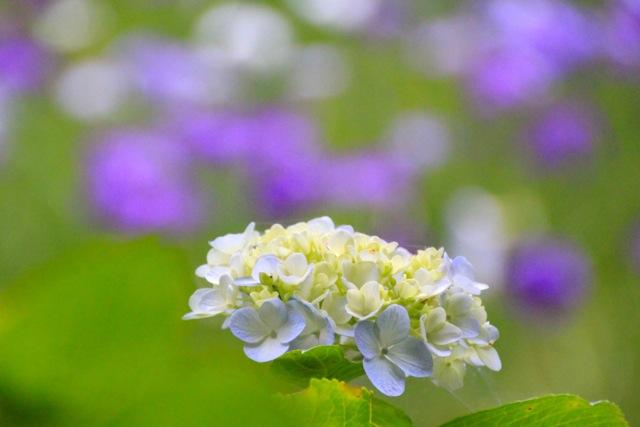 【四季の森公園】part 2_f0348831_22042935.jpg
