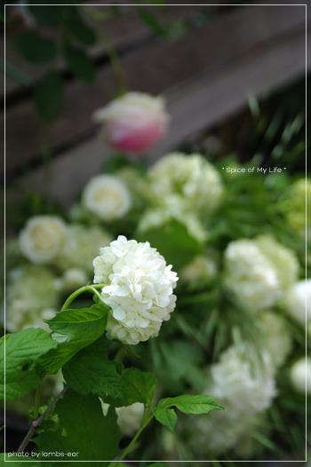 Have a nice weekend!_f0151946_23241760.jpg