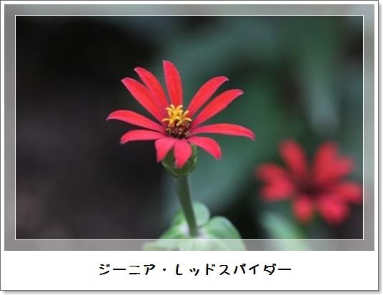 姫アガパンサス_b0214473_17512961.jpg