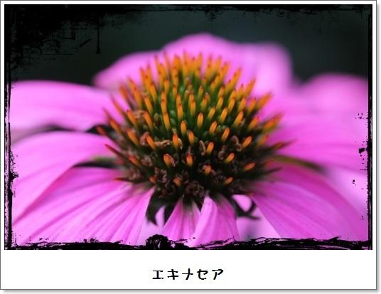 姫アガパンサス_b0214473_17523676.jpg