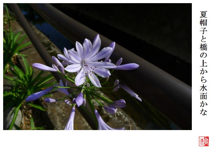 紫君子蘭_a0248481_22165949.jpg