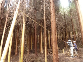 7月13日(日)「樹の伐採&森カフェ」を開催します♪_e0263590_852119.jpg