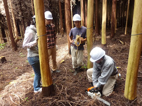 7月13日(日)「樹の伐採&森カフェ」を開催します♪_e0263590_852457.jpg