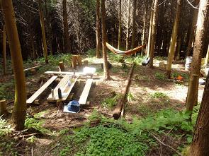 7月13日(日)「樹の伐採&森カフェ」を開催します♪_e0263590_854759.jpg