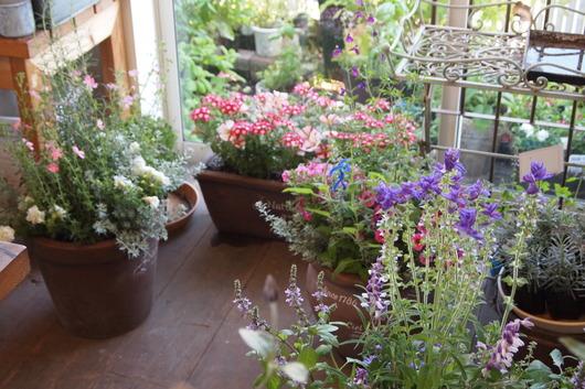 ハーブとお花の寄せ植え_a0292194_1639298.jpg