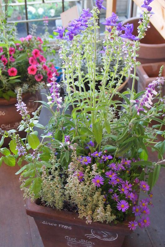 ハーブとお花の寄せ植え_a0292194_16514697.jpg