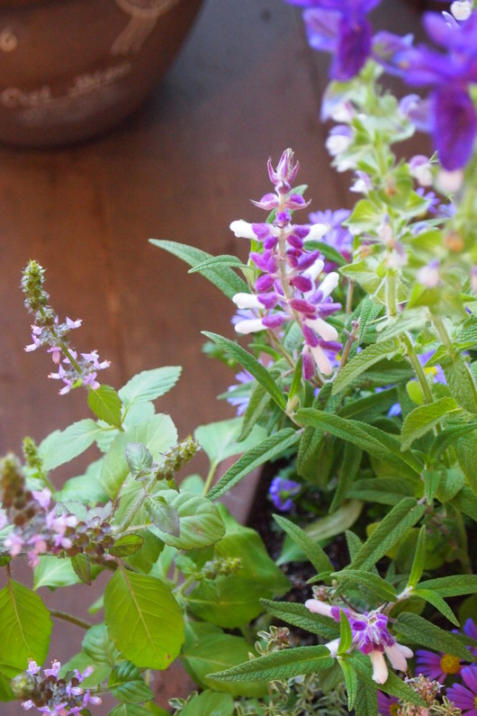 ハーブとお花の寄せ植え_a0292194_16534287.jpg