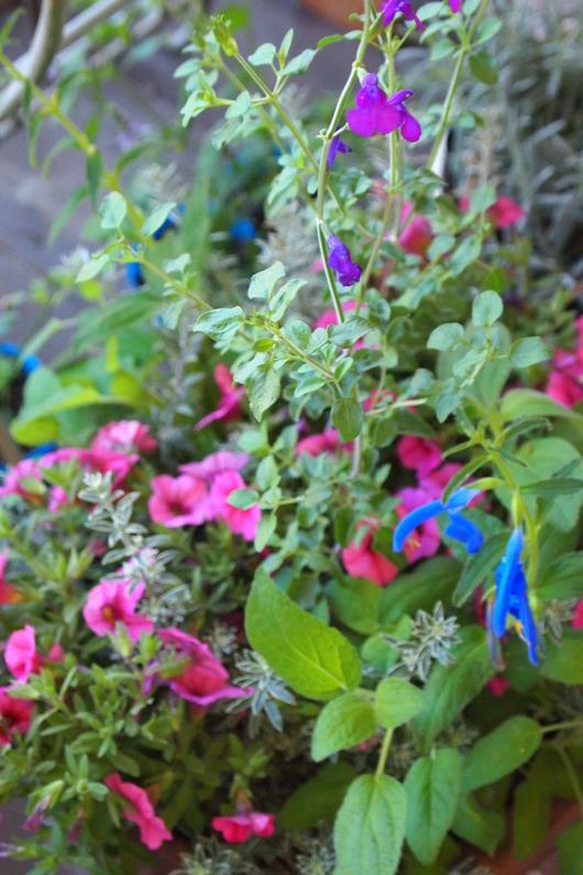 ハーブとお花の寄せ植え_a0292194_17102095.jpg