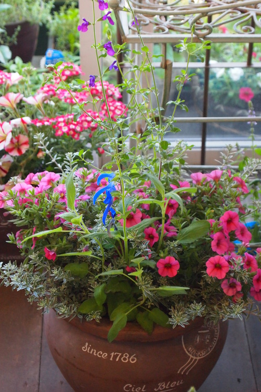 ハーブとお花の寄せ植え_a0292194_1782085.jpg