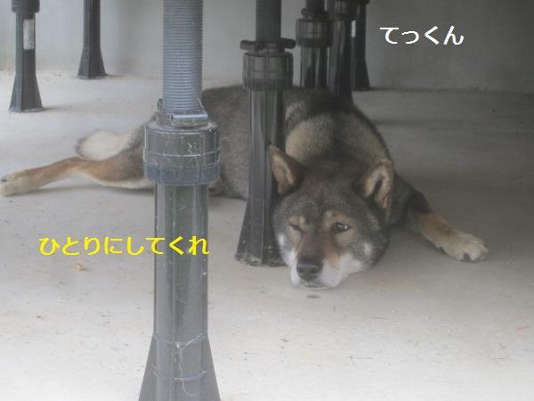 f0143123_951890.jpg