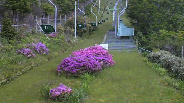 登山リフトで ミヤマキリシマがきれいに咲いてます。頂上付近だけ 雲・・・です。_c0089831_12402920.jpg