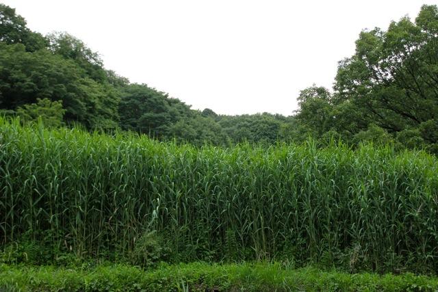 【四季の森公園】part 2_f0348831_11054632.jpg