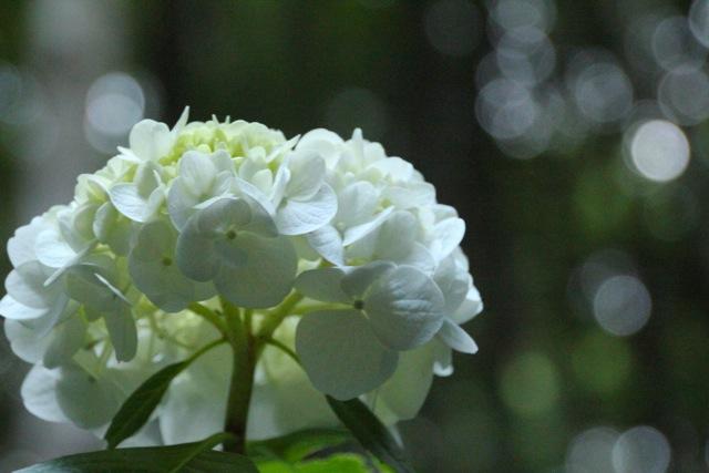 【四季の森公園】part 2_f0348831_11055759.jpg