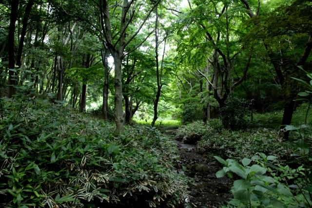 【四季の森公園】part 2_f0348831_11060180.jpg