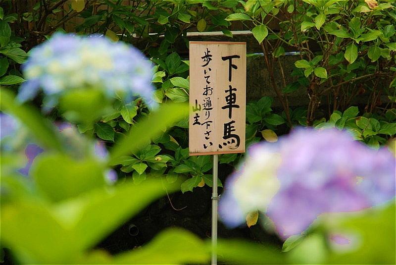 紫陽花_b0314043_08461087.jpg