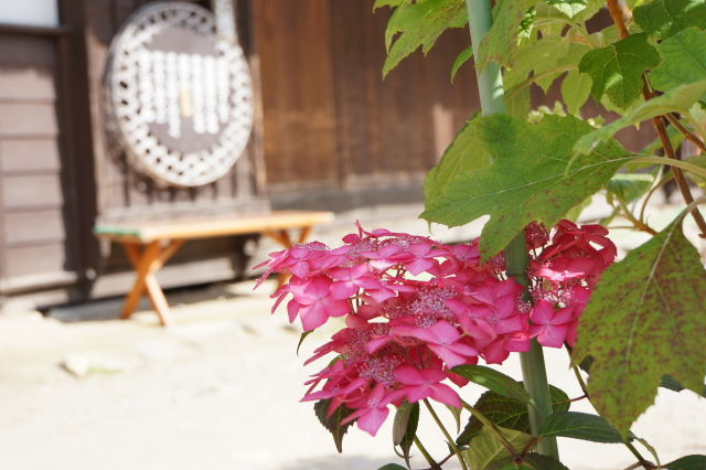 お花の咲く宿場町_a0257652_18133657.jpg