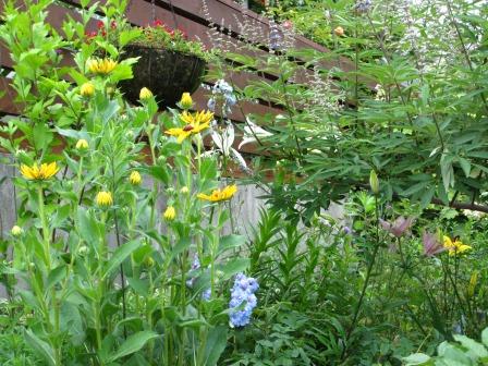 ルドベギアが咲き夏色の庭になってきました_a0243064_07013620.jpg
