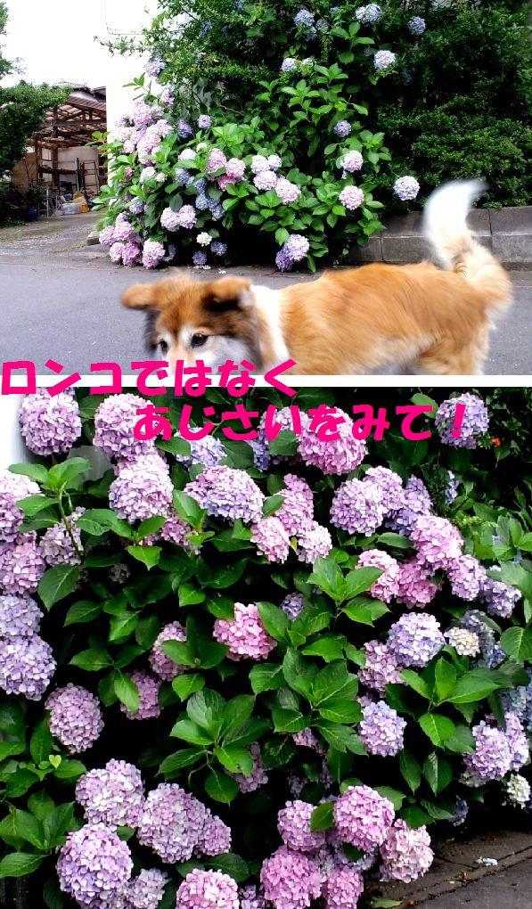 c0025171_22485481.jpg
