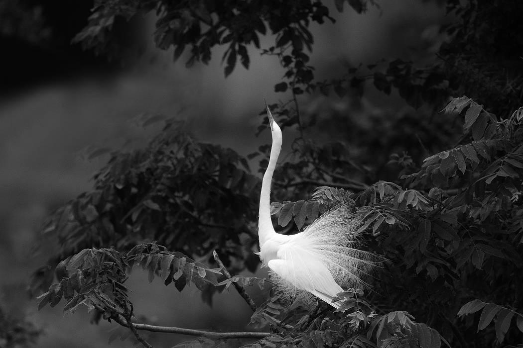 白鷺、その5_c0077395_18562100.jpg