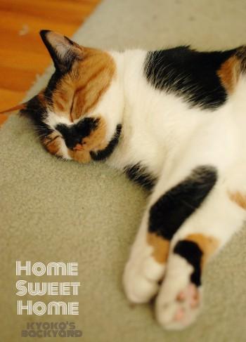 Home Sweet Home_b0253205_130026.jpg