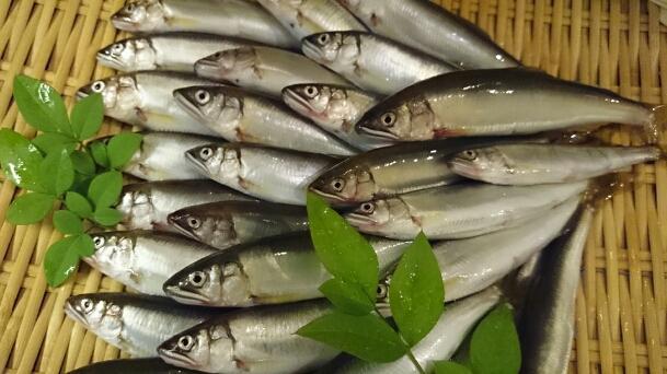 鮎を旬の季節においしく食べる3つの方法