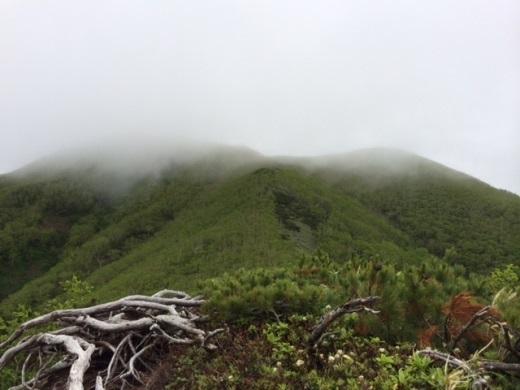 2014年6月22日(日):今日も雨が…[中標津町郷土館]_e0062415_16132238.jpg