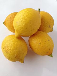 はちみつレモンを作ってみました_c0053520_14463022.jpg