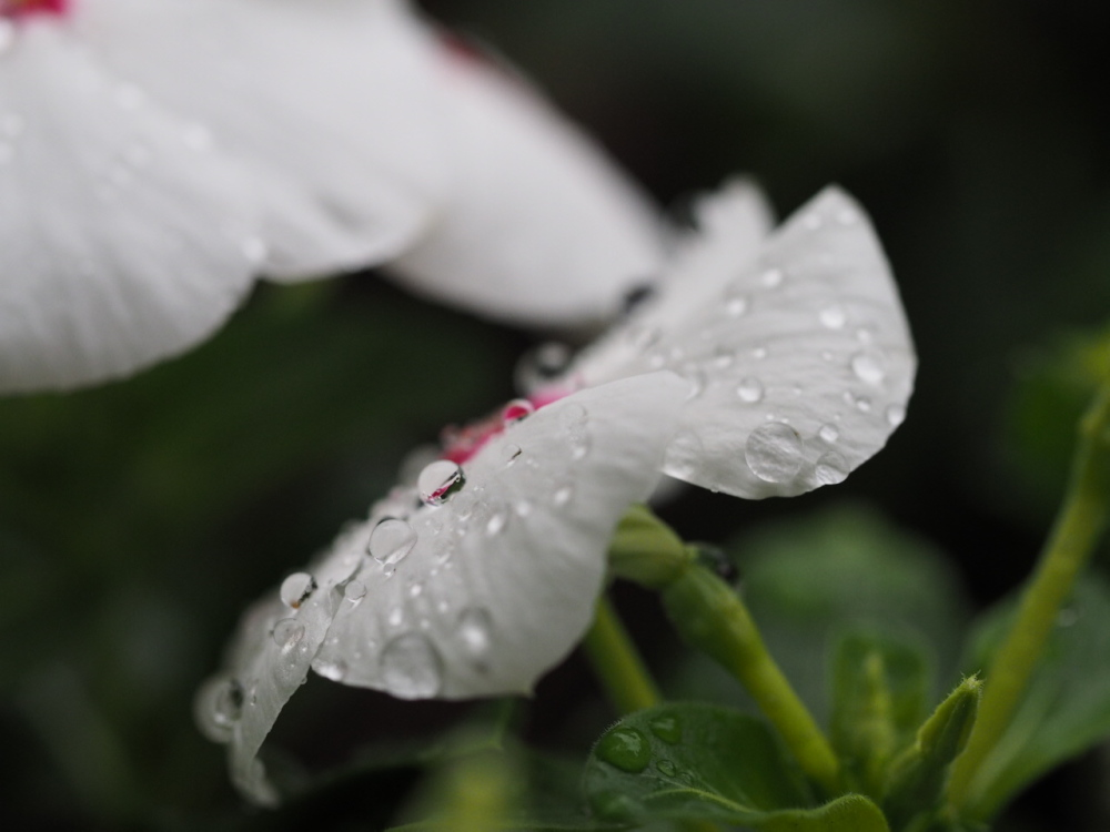 雨の公園_f0324026_20113155.jpg