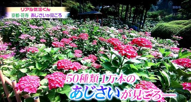 d0020139_815141.jpg