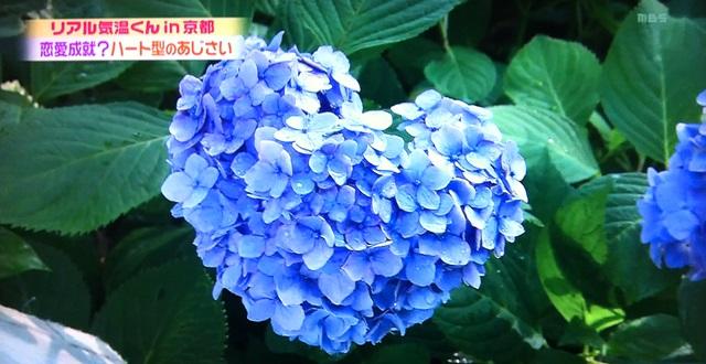 d0020139_82613.jpg