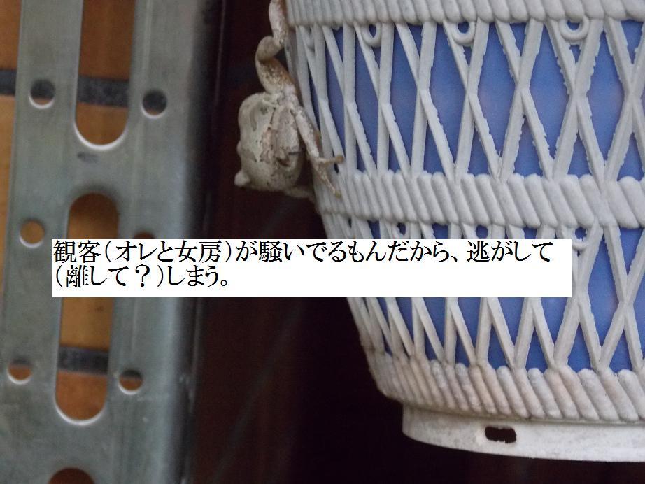 b0193252_176484.jpg
