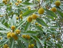 梅雨の最中に咲く水木_b0102572_17521421.jpg